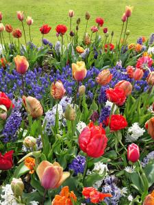 fotoschilderij-hyacints-blanda-tulips- deco-foto-