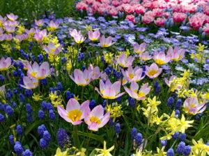 tulpen - keukenhof-deco-foto